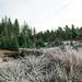 Winter Walk - Pond