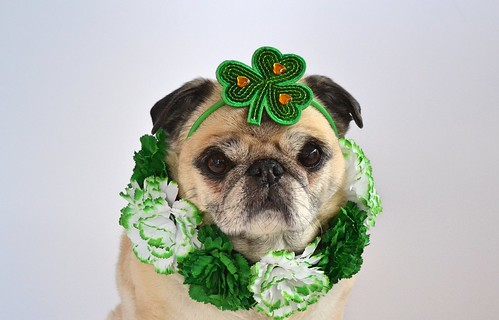 Happy St. Patrick's Day!