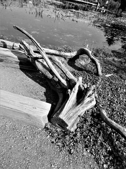stump, Nikon COOLPIX L31