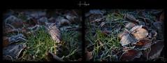 feuilles d'hiver - Photo of Graincourt-lès-Havrincourt