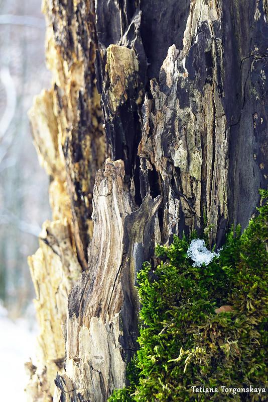 Ствол дерева крупным планом