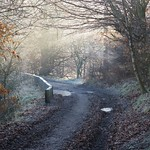 A Pathway Through The Woods  by Sue Ould