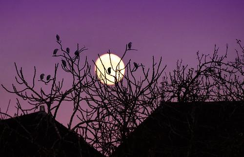 Au clair de la lune.