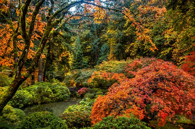 Autumn at the Japanese Garden, Portland