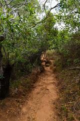 Waimea Canyon Waipoo trail Kauai, Hawaii pano
