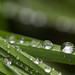 Nature's Rain