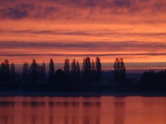 Morenrot am Lac du Der - Photo of Droyes