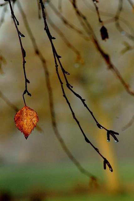 Autumn rain, Canon EOS 1200D, Tamron AF 70-300mm f/4-5.6 Di LD 1:2 Macro