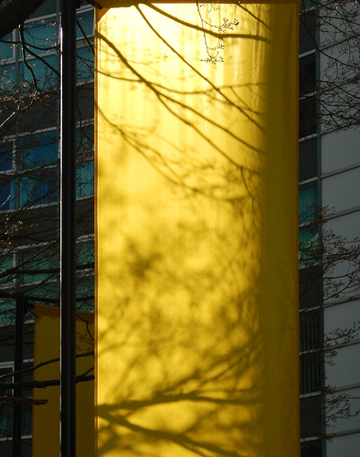 Shadows of branches on a yellow banner in Vancouver