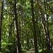 Notton Wood Nature Reserve (151)