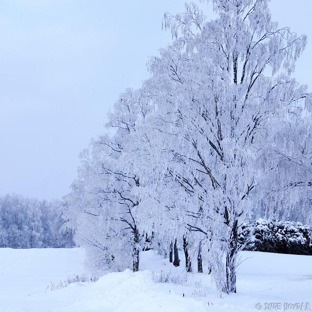 Winter V, Fujifilm X-T1, XF50mmF2 R WR