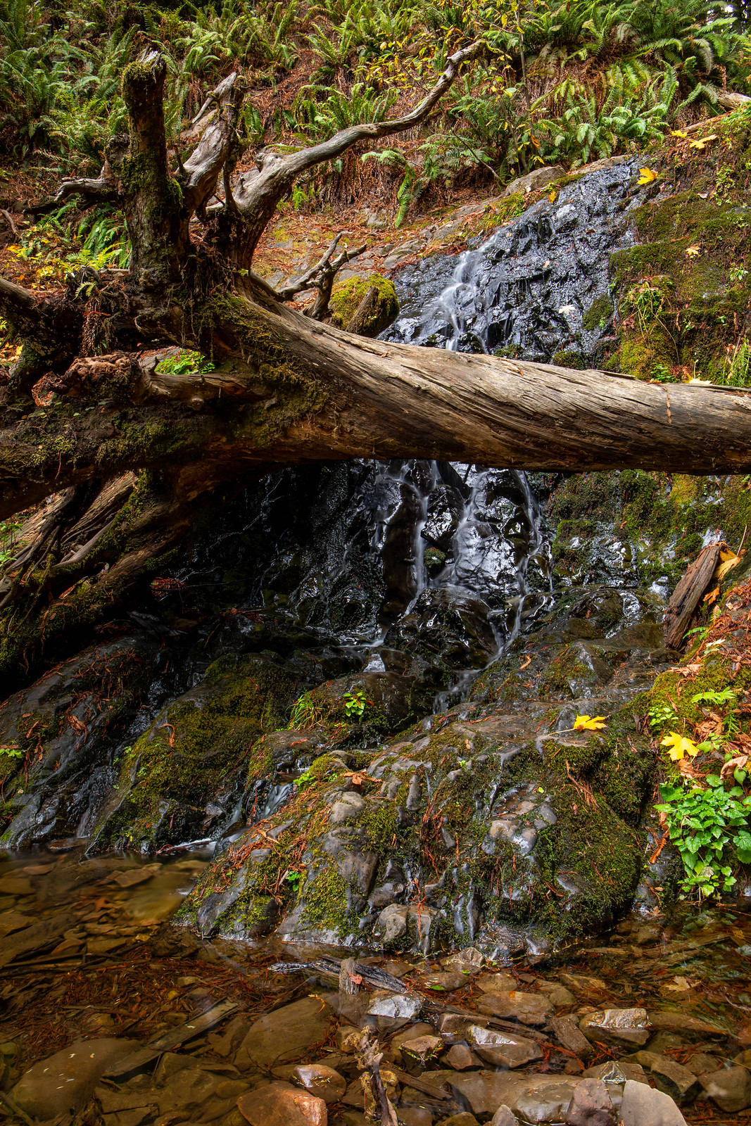 11.03. Jedediah Smith Redwoods State Park