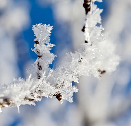 Depths of Winter