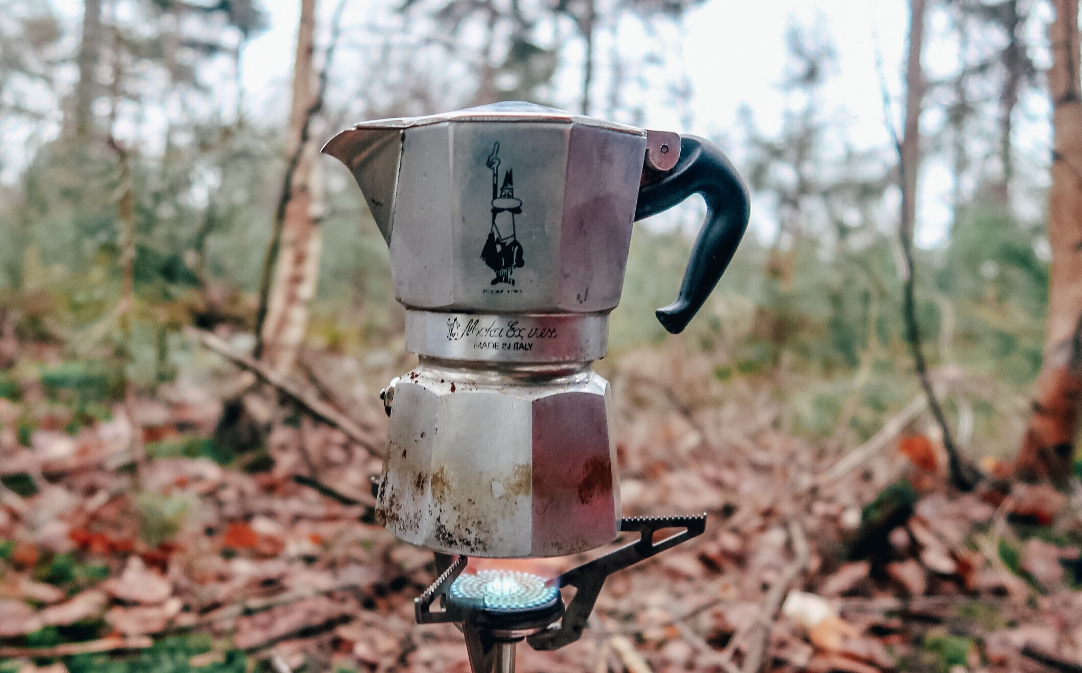Coffee in forest