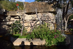 Waterfall and Parrots