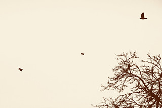313/365 - As the crows flies