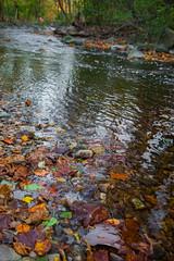 Sligo Creek - Late Fall