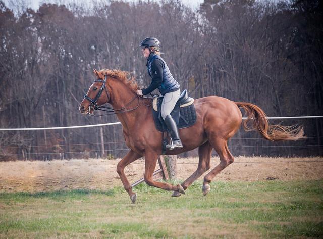 20181116 Austen's Ponies_40