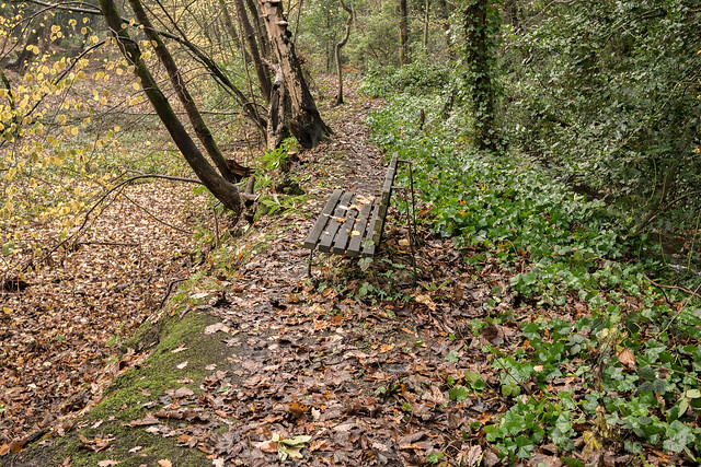 Woodland bench, Meltham, Pennines, Panasonic DMC-GX7, Lumix G 20mm F1.7 Asph.