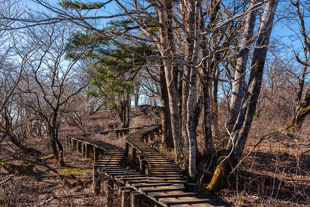 古びた木道を進む
