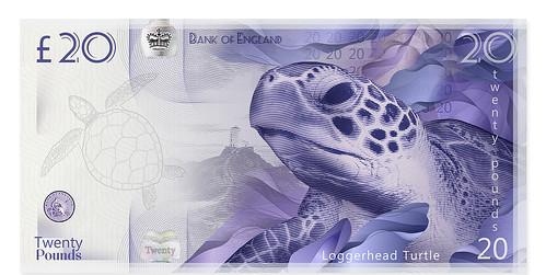 20-Pound-Note-Wales-Loggerhead-Turtle design concept