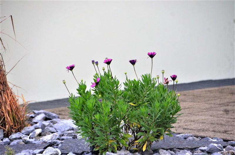 Flowers Estate 12.11.2018