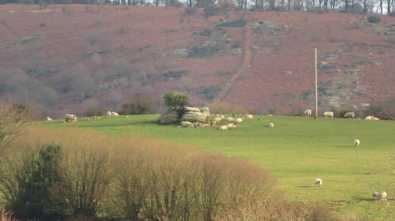 Outcrop in a field