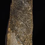 Fossiele vissen Welfesholz
