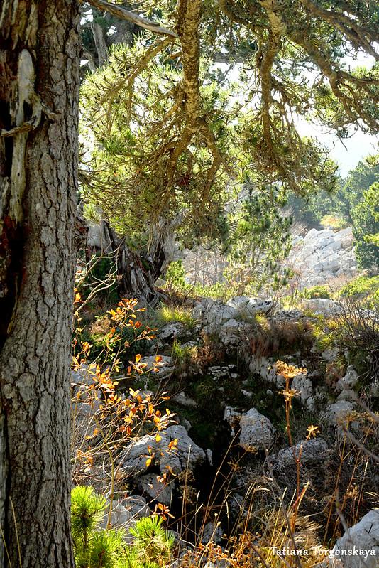 Растительность на горе Борова глава