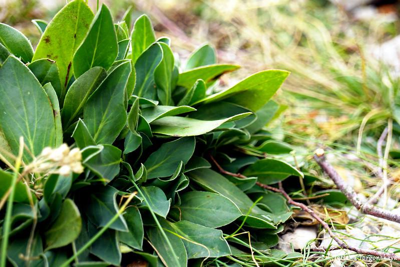 Растение с тропы