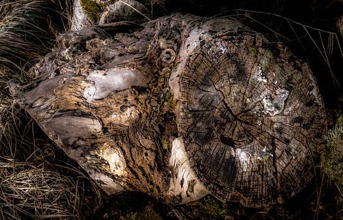 """stump """"aged"""""""