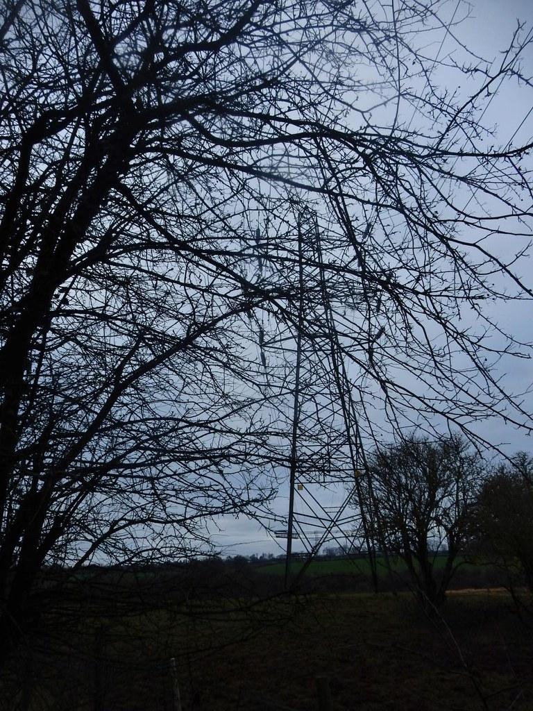 Pylon through trees Little Kimble to Saunderton