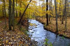 Fall at North Chagrin Reservation