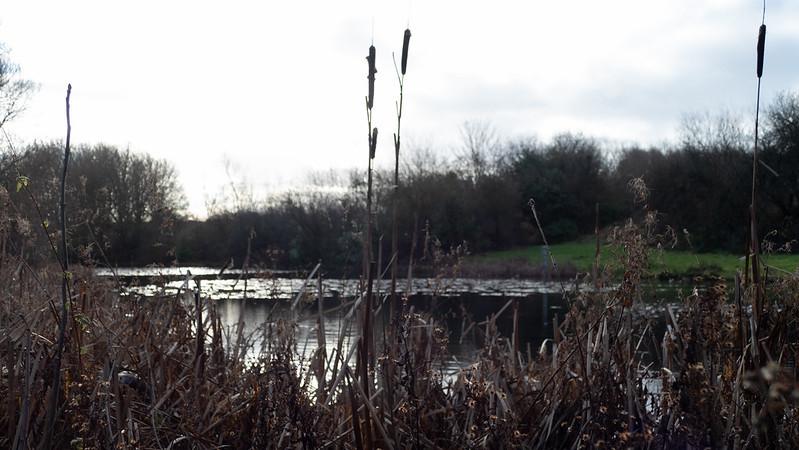 Anglers' Pool, Fowler's Park