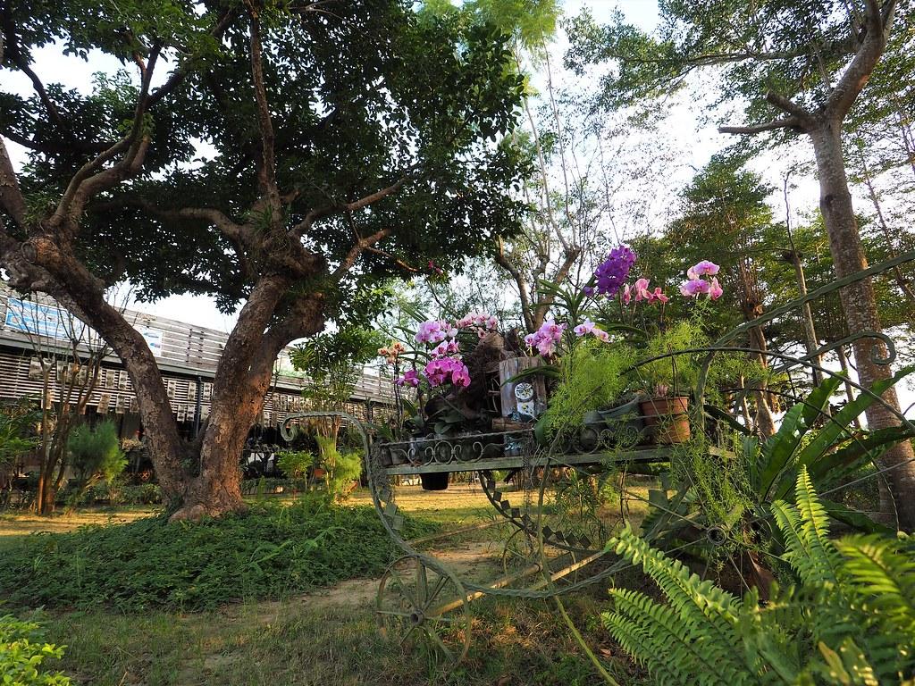 山上蘭科植物園 (3)