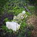 Fallen Over Angel, Abney Park Cemetery