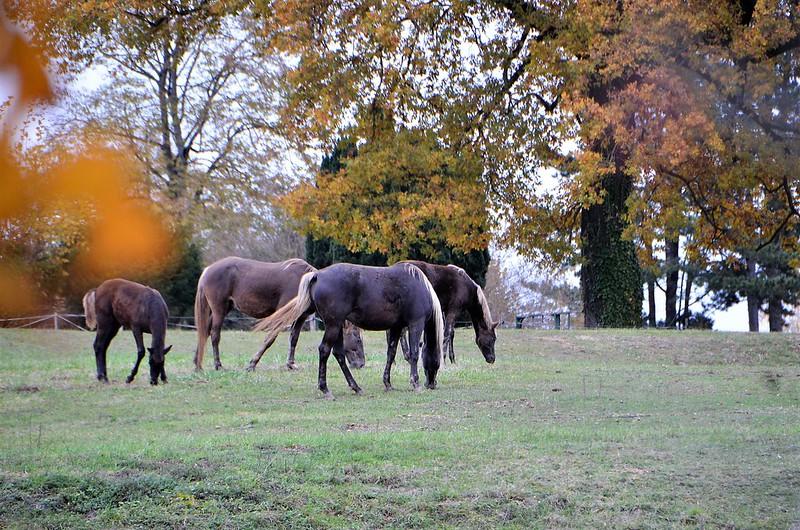 Horses 08.11 (7)