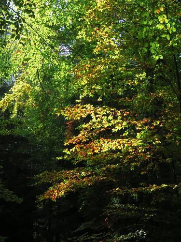 20170930 03 104 ostbay Herbst Wald Blätter gelb