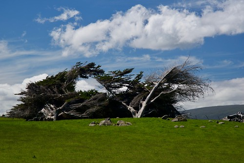 Southland Trees