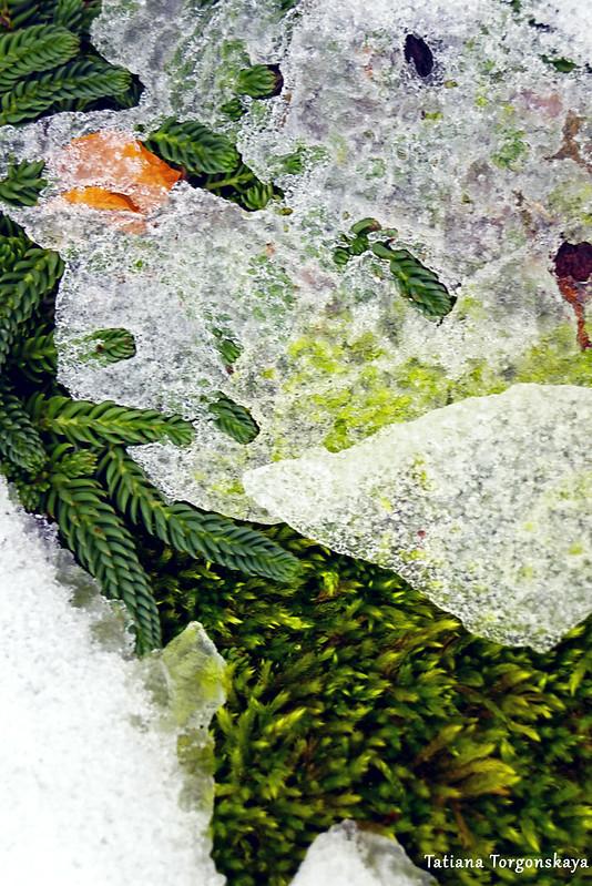 Лед на растениях