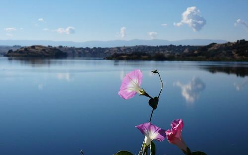 Flores en el pantano