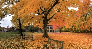 Belmont Center foliage
