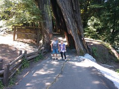 Shrine.Drive.Thru.Tree.KaylaO