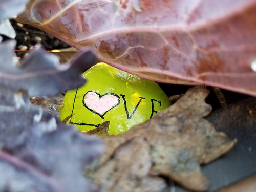 Love under Kale
