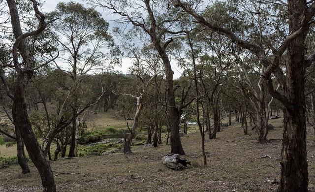 Cobrabald River, Nikon D7200, AF-S DX Nikkor 18-55mm f/3.5-5.6G VR II