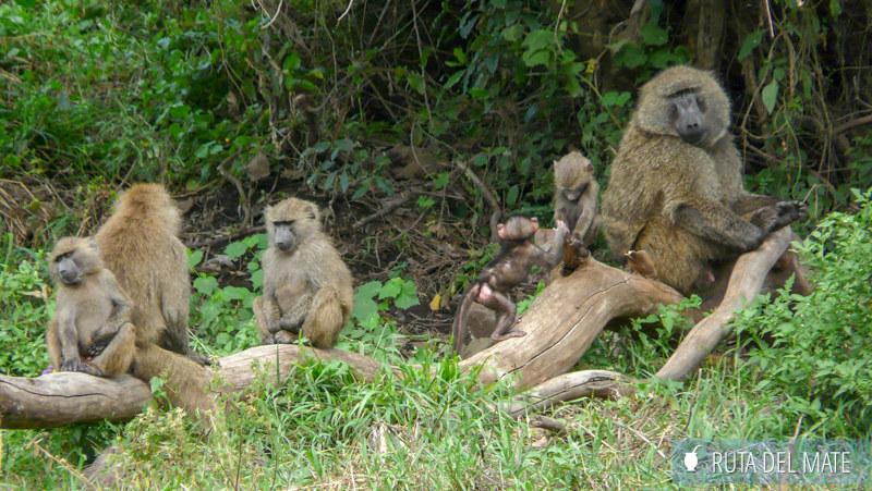 Animales hacer un safari P1130494