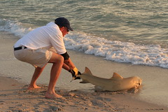 USA - Florida -Naples - shark put back to sea by a fisher (2)