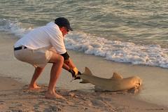 USA - Florida -Naples - shark put back to sea by a fisher (2)