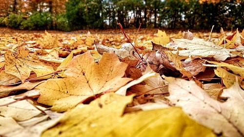 leaves november