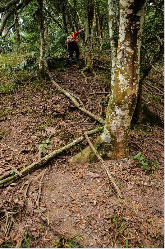 歐帕喀爾山陡登路段